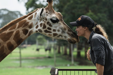 "Mogo Wildlife Park zookeeper Sam Ion with Oni the giraffe. Ion was woken at 6am on New Year's Eve by the news the fire was heading for the zoo. ""I knew I had to get there,"" she says."