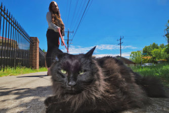Nox the cat doesn't like being rushed when he's out walking with his owner, reporter Sherryn Groch.
