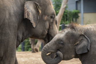 Viewers can watch interviews and livestreams during the zoo's closure due to coronavirus.