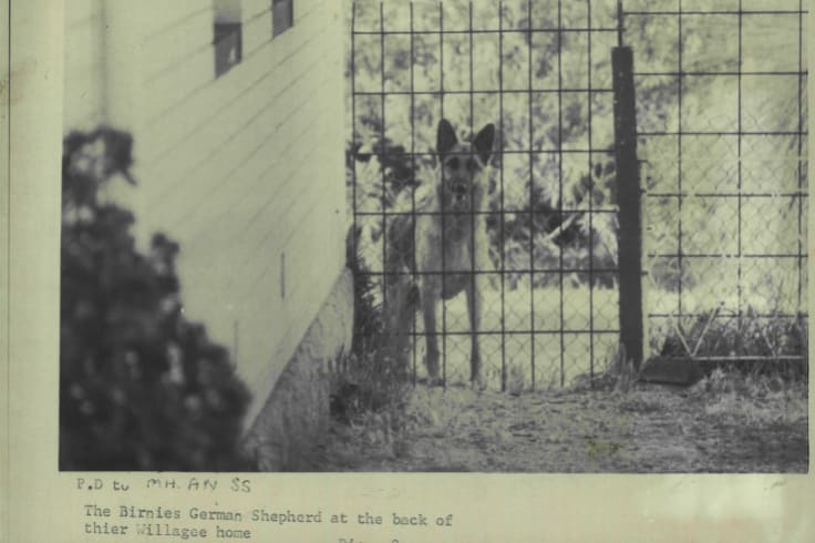 The Birnie German Shepherd at the back of their Willagee home after their arrest.