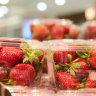 New Zealand supermarket withdraws Australian strawberry brand over needles