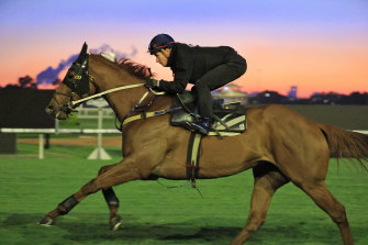 Nature Strip has a morning glow in his final gallop before The Everest at Rosehill on Tuesday