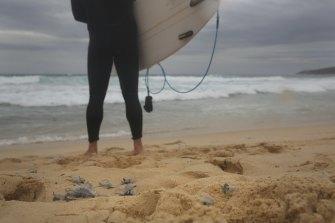 A surfer stands among stranded bluebottles at Maroubra.