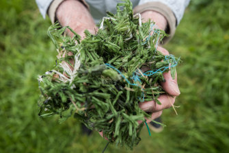 The environmental effects of artificial grass have sparked debates in local councils.