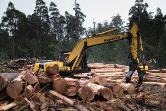A logging coupe near Huonville, south-east Tasmania.