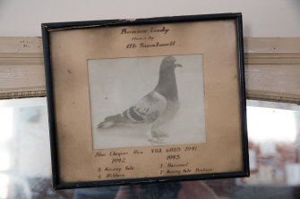 Photo of a 1940s champion bird in the hall.