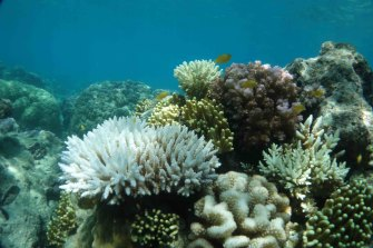 Lizard Island, north of Cairns, is already showing corals beginning to bleach amid sustained warm waters.