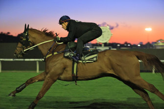 James McDonald rides Nature Strip during a trackwork session ahead of The Everest at Rosehill Gardens in 2020.