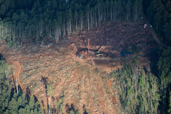 A logging coupe in south-eastern Tasmania.