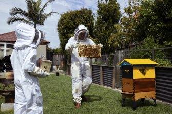 Gavin Sandercoe and his children, James and Natasha, have started beekeeping during COVID-19 lockdowns.