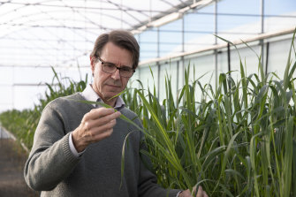 Professor Robert Park from the  University of Sydney has won the CSIRO Eureka Prize for leadership in innovation and science for his research into 'rust' fungus in crops.