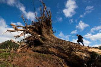 Will Kanavan stands on the stump of a gum tree on his Yinnar South farm.