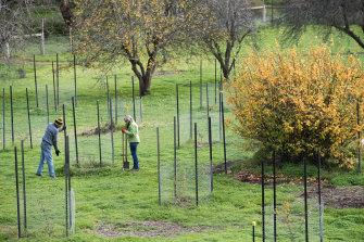 Werribee Park Heritage Orchard Committee has more than 100 volunteers.