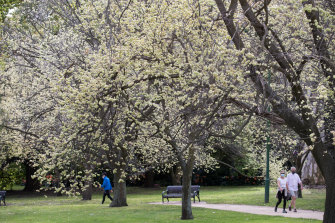 Spring is beginning to bloom in Melbourne.