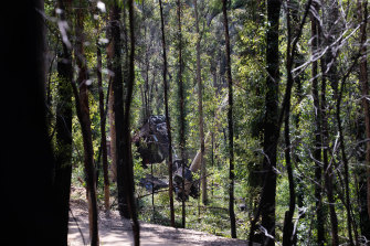 The South Brooman State Forest in NSW is one of those slated for logging at pre-fire levels.