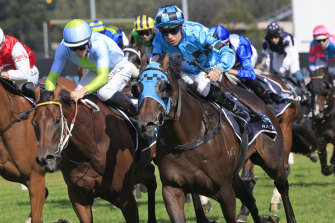 Mo'unga (right) and Sky Lab fight out the finish of the Rosehill Guineas.