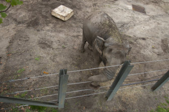 Happy the elephant in her enclosure at the Bronx Zoo in New York.