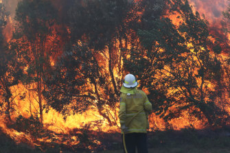 Firefighters battle bushfires in Angourie, northern NSW.