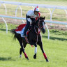 Cox Plate favourite Lys Gracieux, Kluger get first look at the Valley
