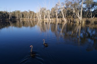 Gunbower Creek wetlands, near the Cohuna irrigation canal that is being screened to prevent native fish loss.