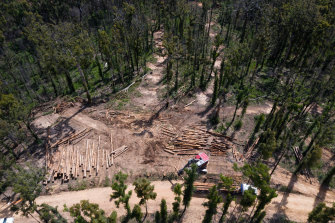 Logging resumed in October in the South Brooman State Forest despite multiple breaches of conditions.