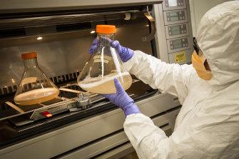 Mylinh La at CSIRO's vaccine manufacturing facility.