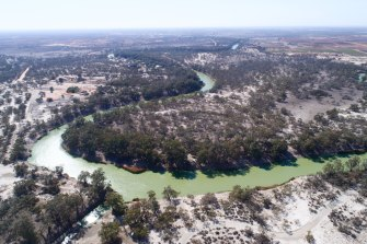 The Darling River near Menindee has been hit by cyanobacterial blooms several times in recent years, including a large outbreak in September 2019.