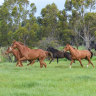 Horse breeders want data audit, taskforce for welfare crisis
