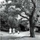 The original English elm planted in the Royal Botanic Gardens Melbourne in 1851 by Charles La Trobe, seen here in 1951.