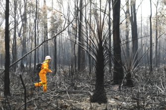 About 3000 hectares of high-quality koala habitat has been lost in the recent fires near Port Macquarie - and some areas are still burning.