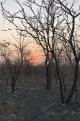 An area that has been scorched by fire in the state of Mato Grosso, Brazil, this week.