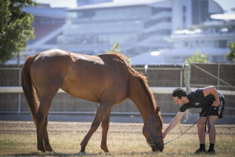 Melbourne Cup runner Vow And Declare at Danny O'Brien's stables with assistant trainer Ben Gleeson.