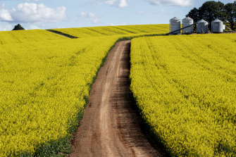 Canola fields in Central West NSW. The state experienced its best ever winter crop in 2020.