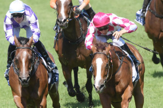 Little beauty: Champagne Cuddles breaks a run of placings with a well-deserved win.