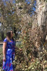 ANU heritage officer Amy Jarvis at the Blacksmith Tree.
