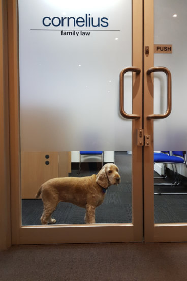 Who let the dogs in? Meet Tommy, the director of first impressions (and wellbeing)