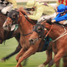 Race-by-race tips and preview for Wagga on Tuesday