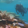 'There is no time to lose': Great Barrier Reef has lost half its corals