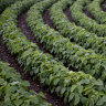 Nufarm rising after Brazilian glyphosate ban overturned