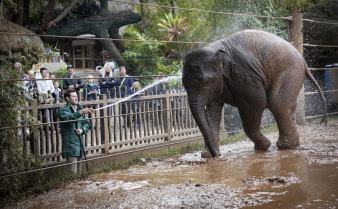 Walk-through elephant wash courtesy of keeper Tim Bennett.