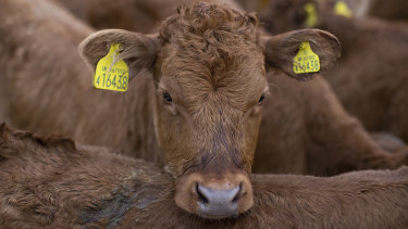 The way in which meat is farmed may change.