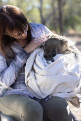 Dr Valentina Mella from the University of Sydney holding a koala after a health check.