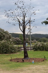 Amanda Lockton's sculptural tree, 'Fire's Edge', recalled the bushfires that ravaged the Wollombi area less than a year ago.
