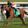 Waller's stars back in good shape to start the autumn