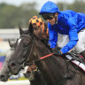 'He absolutely relishes the heavy': Avilius chases big Rosehill treble