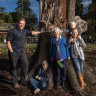 Amid the mourning, new life for one of Melbourne's most-loved trees