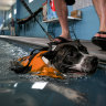 Vets urge Perth pet owners to be wary as temperatures tipped to soar