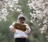 Bees need hives alive in national parks as weather warms and dries