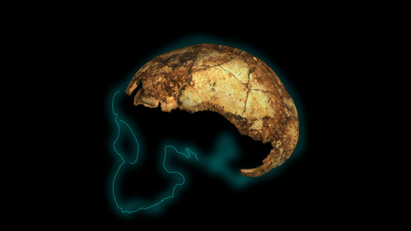 The two-million-year-old skull rewriting the story of humanity