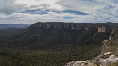 Blue Mountains' Radiata Plateau bought by NSW government